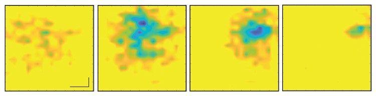 Поредица от изображения на биещо сърце, всяко разделено с 5 милисекунди, с променящото се електрическо поле, представено като различни шарки на графеновия лист
