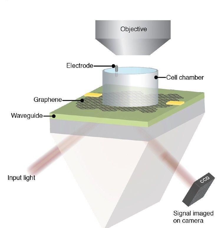 """Схема на """"графенова камера,"""" или сензор с усилено вълноводно графеново електрическо поле (CAGE)"""