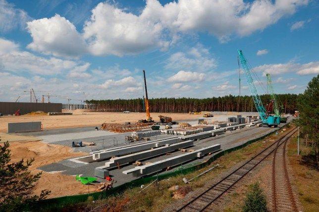Змии и пясъчни гущери застрашават строежа на Tesla фабриката в Германия